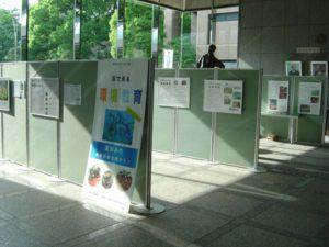 区役所一階のロビーには、畳の大きさの掲示板が6枚ずつ、3列になって配置され、その両面に30枚のパネルが展示されています。