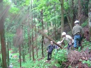 森林整備の様子
