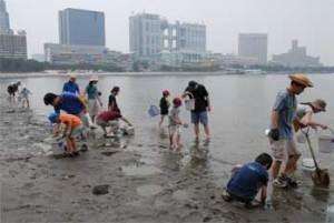 お台場港陽中学校前の砂浜で生き物を探す