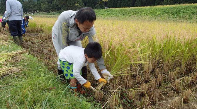 「田んぼのイロハ」稲刈り編を行いました