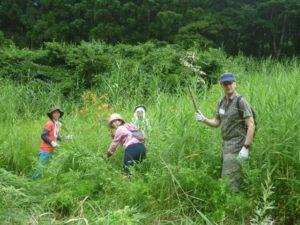 大明神保全地域の作業は梅雨の間に高さ2m以上にも伸びたヨシの草刈りをしました