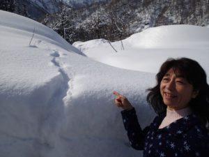 晴れた朝、雪の上には動物たちのさまざまな跡が残っています。