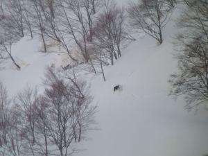 集落のすぐ前の斜面にいたカモシカ。