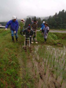 草取りに使われる「除草機」を押す、田んぼのイロハの参加者のみなさん。