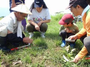 地元の人に研ぎ方を教わり、カマの刃を研いでから始めました。