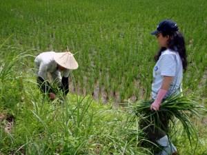 地元の人はとても手際が良く、おもしろいように草が刈られていきます。
