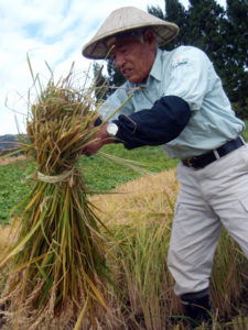 Mr. FUEKI, Minoru, a local person, is an expert. He harvested and bound straws very quickly.