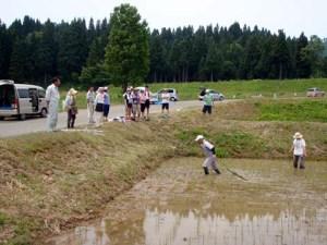 「チェーン除草」の様子。のれん状に3センチ置きにチェーンを取り付けた2メートルの棒を田んぼの上で引くと、チェーンの輪に雑草が引っかかっていました。