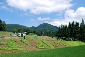快晴のもと、棚田の斜面に思い思いのアートを描き出す参加者たち。