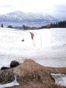 真っ白だった雪は、この時期になると黄砂や花粉で白くなくなります。