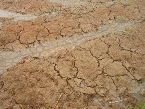 田起こしする前、肥料を播き終わった田んぼの土の様子
