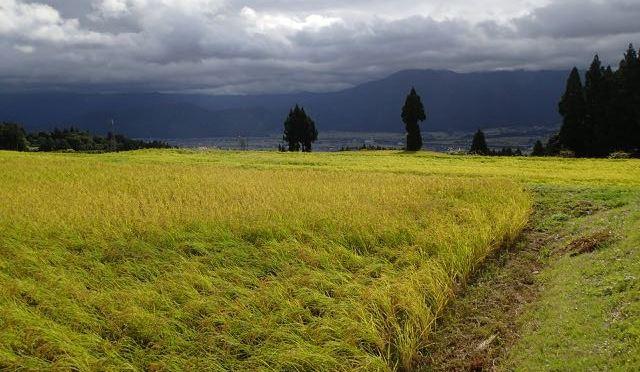 締切間近です、田んぼのイロハ稲刈り編