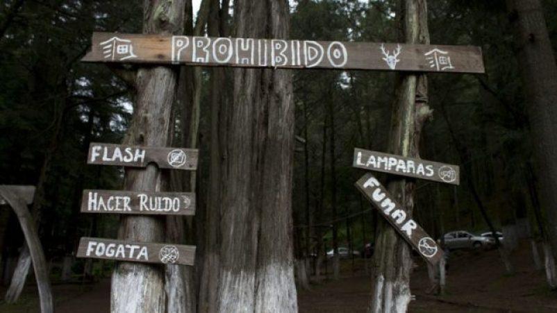 bosque, madera, luciérnaas, biodiversidad, ecosistema, turismo, campesinos