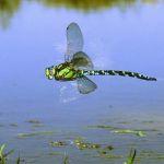 ¡Salva a los insectos! Cómo evitar un colapso mundial de insectos