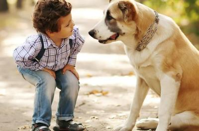 mascota, perro, amigos, responsabilidad