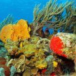 Los arrecifes de coral reducen los daños causados por las inundaciones