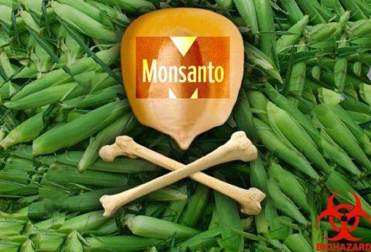 semillas, apicultores, transgénicos, Monsanto, plagas