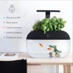 Ecooblom: Los peces alimentan a las plantas y las plantas cuidan a los peces