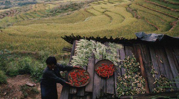 agricultura, alimentos, cultivos, químicos, abonos