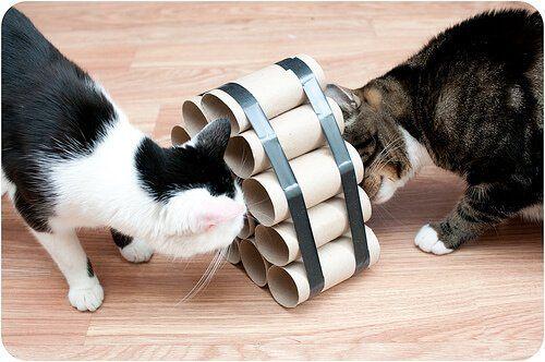 gatos, mascotas, animales