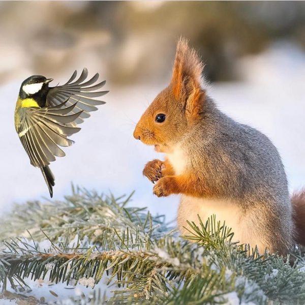 animales, comunicación, conversación