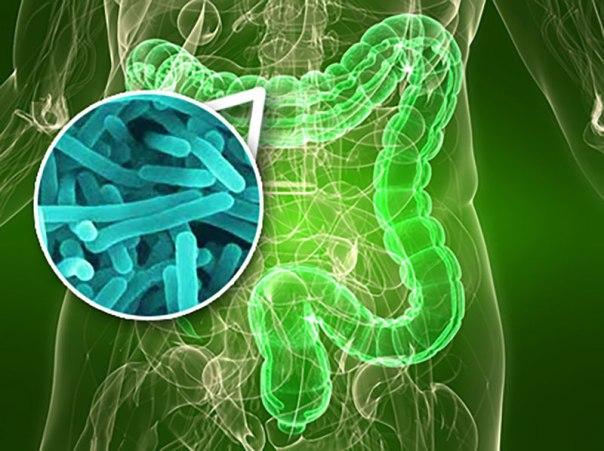 bacterias, intestinos, cáncer, glifosato