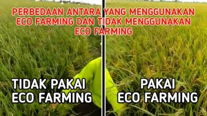 hasil eco farming