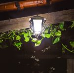 bugs around light at night