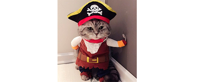 Disfraces de Halloween - gato pirata