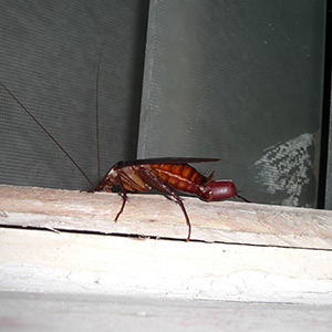 cockroach control in Chapel Hill