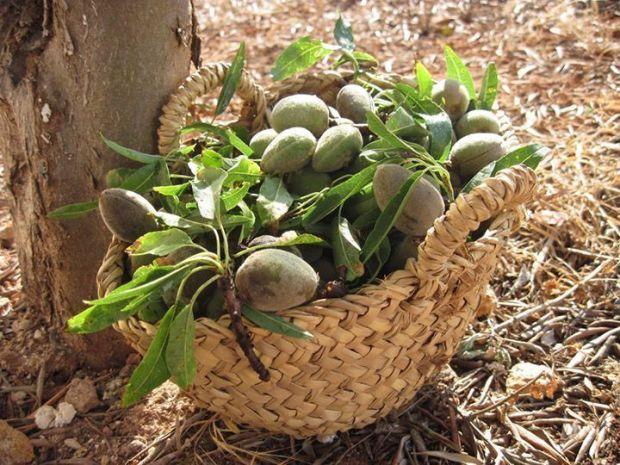 Almendras con cáscara en una cesta