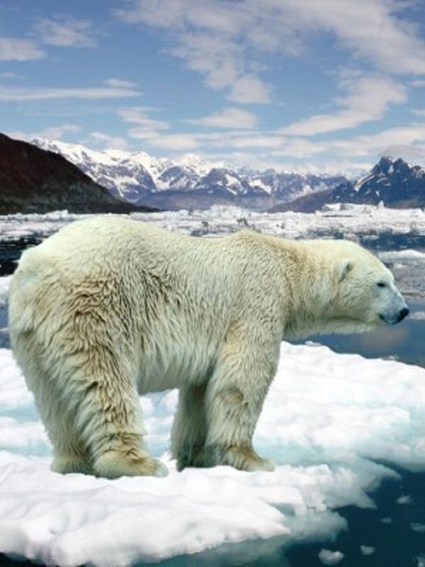La minería, el petróleo, el gas y la pesca quieren poner sus zarpas en el Ártico