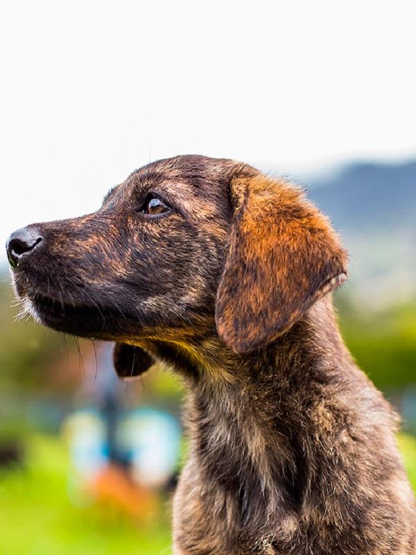 Más de 50 perros abandonados buscarán ser adoptados en el desfile solidario de Navidad de la protectora AUPA y Bioparc