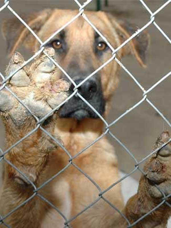 El Ayuntamiento de Barcelona de Ada Colau 'fulmina' las subvenciones en favor de los animales