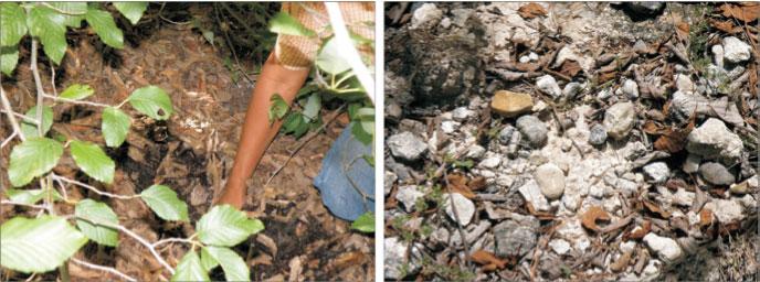 Soil formed from the litter beneath an alder tree | Eroded soil a few meters outside the alder grove