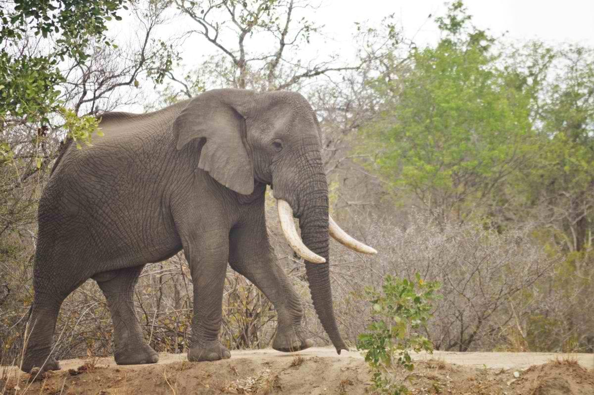 Karongwe_Elephant-2_Annemi