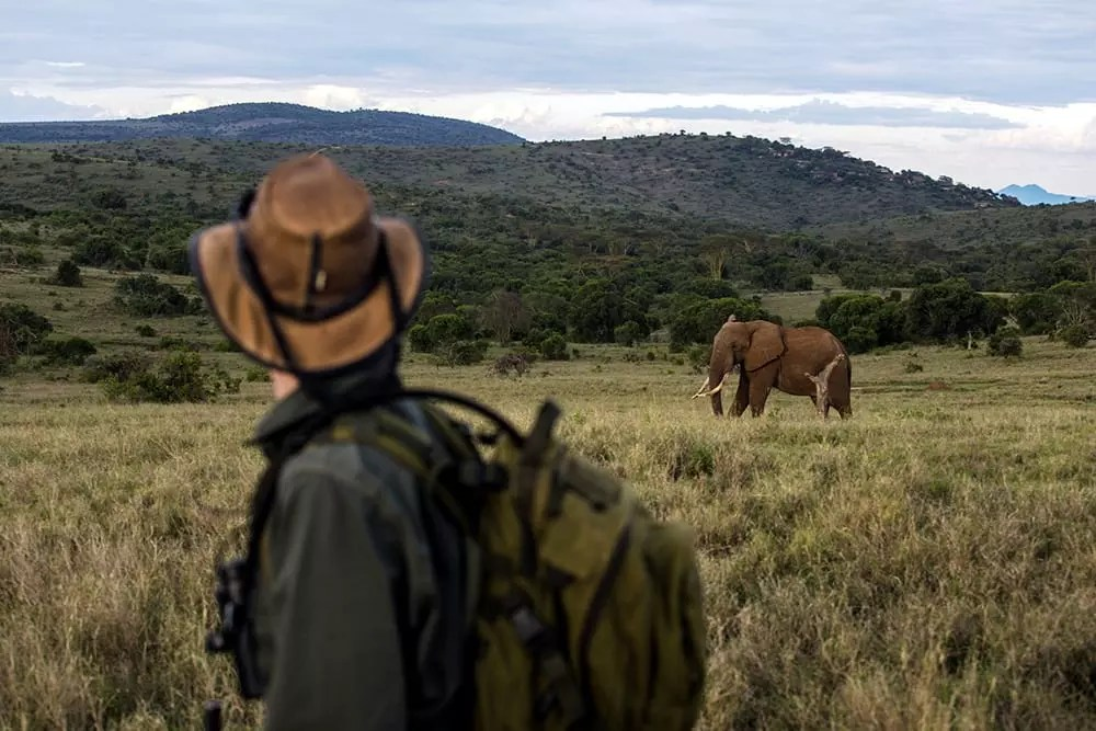 Kenya Borana Conservancy Camp EcoTraining Elephant Walk 2