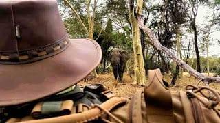 Makuleke-_Elephant-youngster_Vaughn-du-Plooy