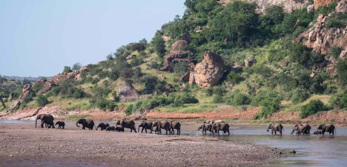 Mashatu_elephants-crossing-river_Cara-Pring_cropped