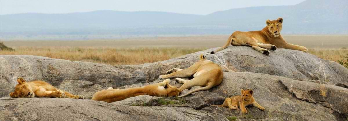 botswana-game-reserve