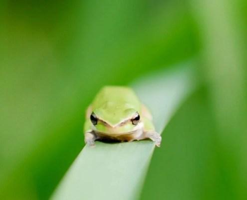 EcoTraining Quiz - Amphibians