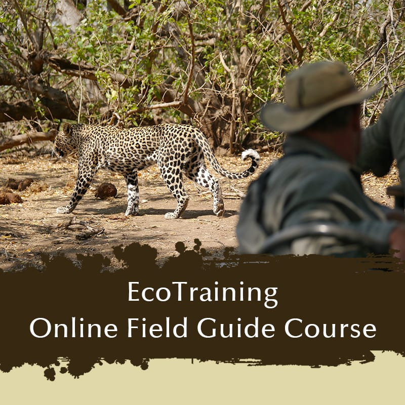EcoTraining Online Field Guide - Ecotraining