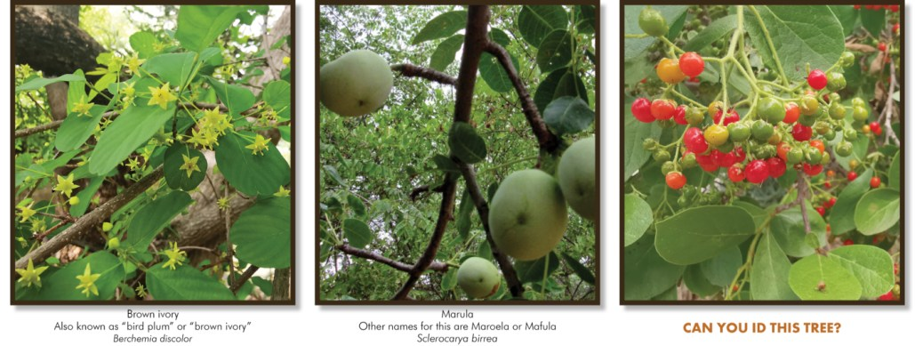Fruits and flowers of the Lowveld - Ecotraining