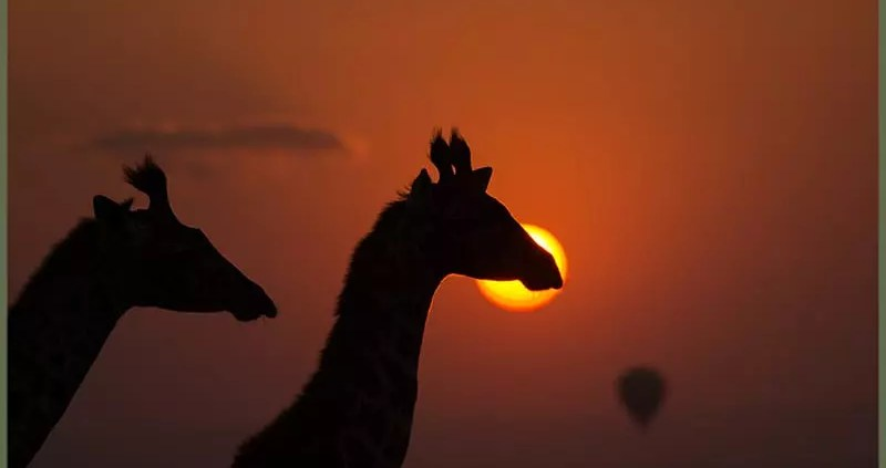 Giraffe Sunset - EcoTraining ELearning