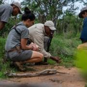 Walking Safari - Ecotraining - Tracking