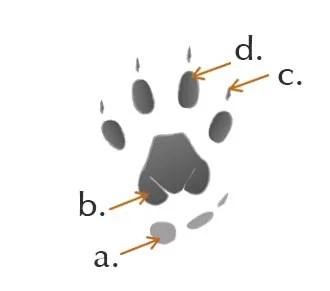 Illustration: Mongoose left front track
