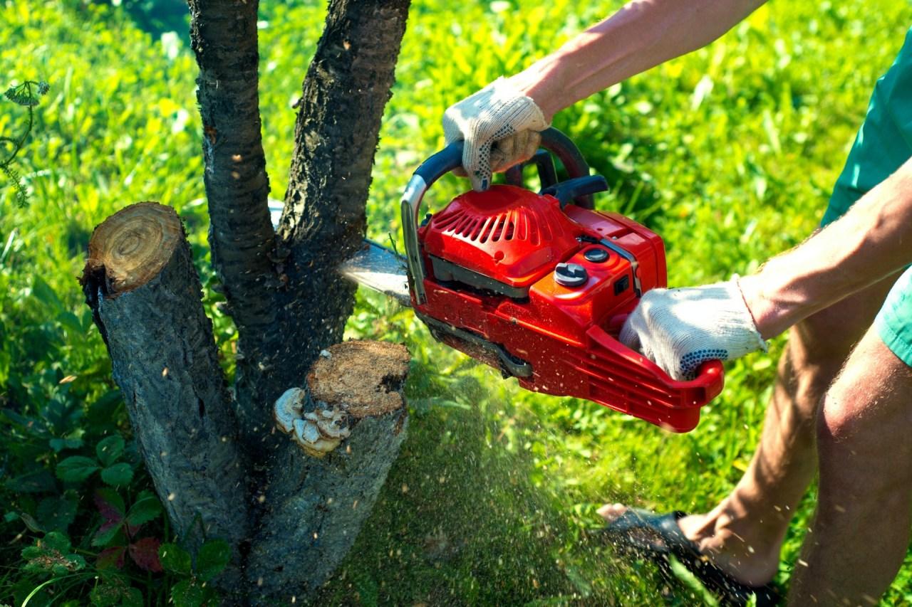 Chainsaw cutting through tree branch