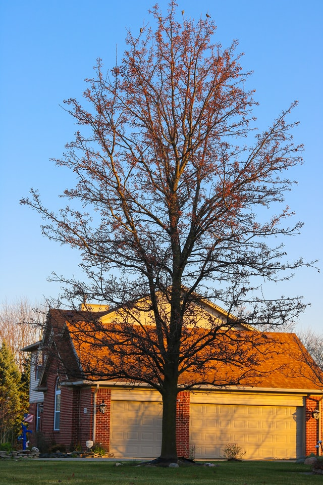 Pros and cons to removing a tree on your property