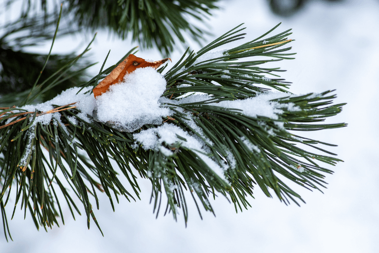 how to prepare your landscape for winter
