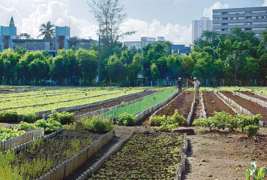 Resultado de imagen de permacultura en cuba